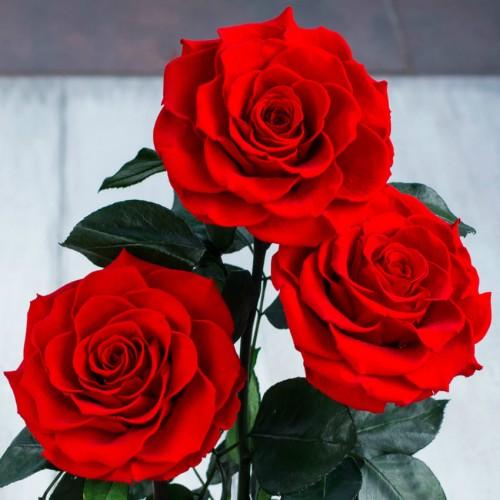 Букет из роз в колбе De Lux-2