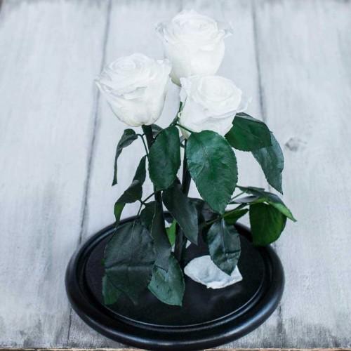 Букет из роз в колбе Standart Белый-2