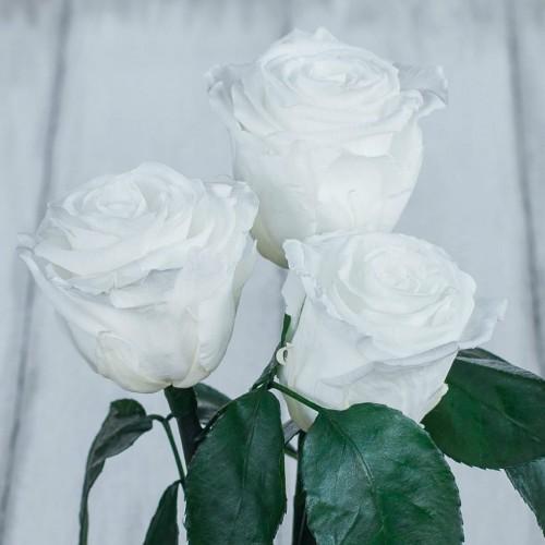 Букет из роз в колбе Standart Белый-3
