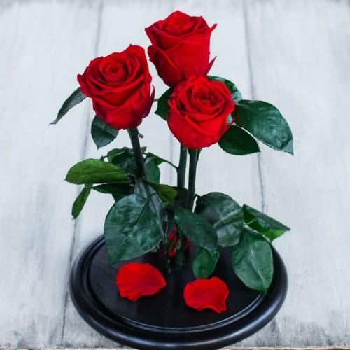 Букет из роз в колбе Standart-3