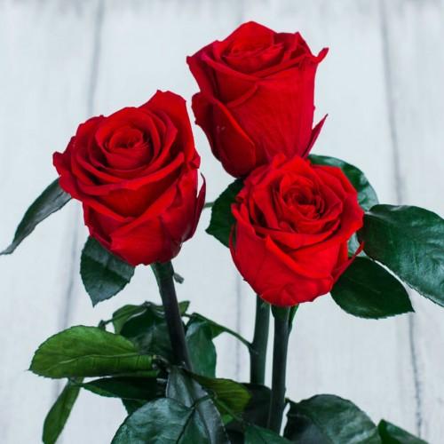 Букет из роз в колбе Standart-2
