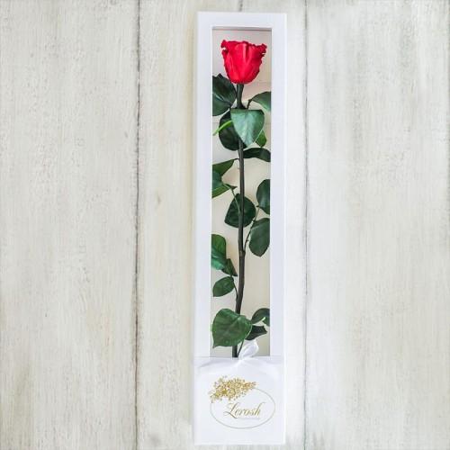Долгосвежая роза в коробке Standart 60 см-3