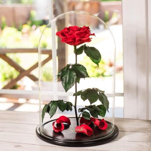 Роза в колбе De Lux 43 см Красная-1
