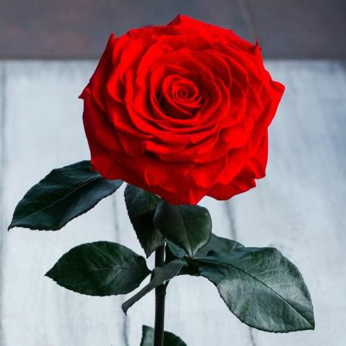 Роза в колбе De Lux 43 см Красная-3