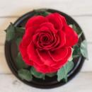 Красная роза в колбе De lux с гирляндой-4