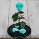 Роза в колбе Standart Голубая-3