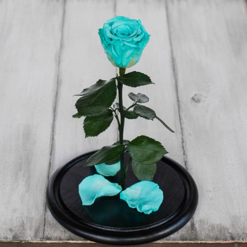 Роза в колбе Standart 33 см Голубая-3