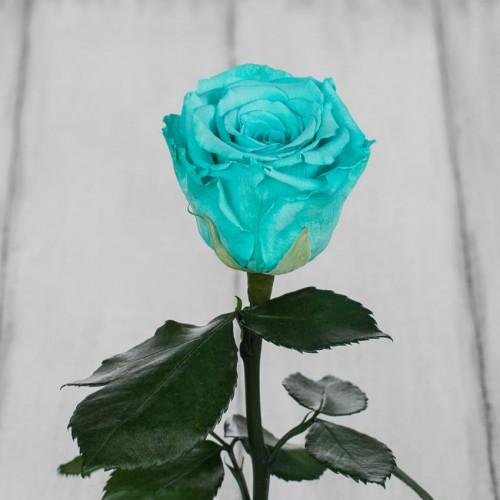 Роза в колбе Standart 33 см Голубая-2