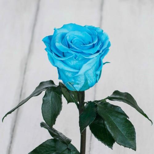 Роза в колбе Standart 33 см Бирюзовая-2