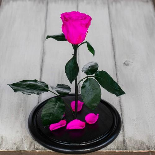 Роза в колбе Standart 33 см Ярко розовая-3