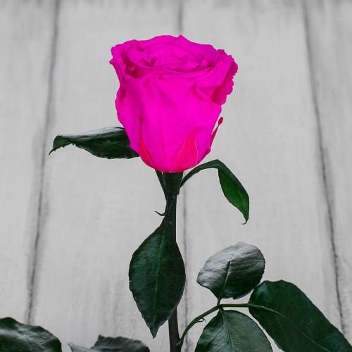 Роза в колбе Standart 33 см Ярко розовая-2
