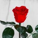 Роза в колбе Standart Красная-4