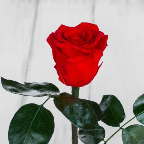 Роза в колбе Standart 33 см Красная-4