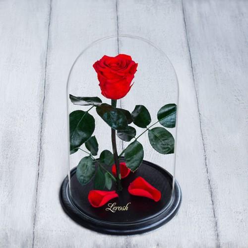 Роза в колбе Standart 33 см Красная-1