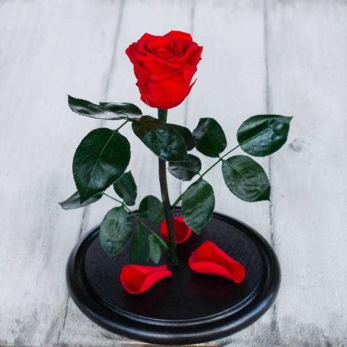 Роза в колбе Standart 33 см Красная-3