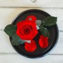 Роза в колбе Standart Красная-2