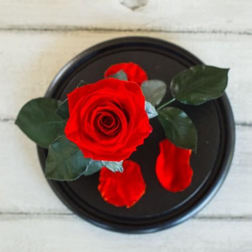 Роза в колбе Standart 33 см Красная-2