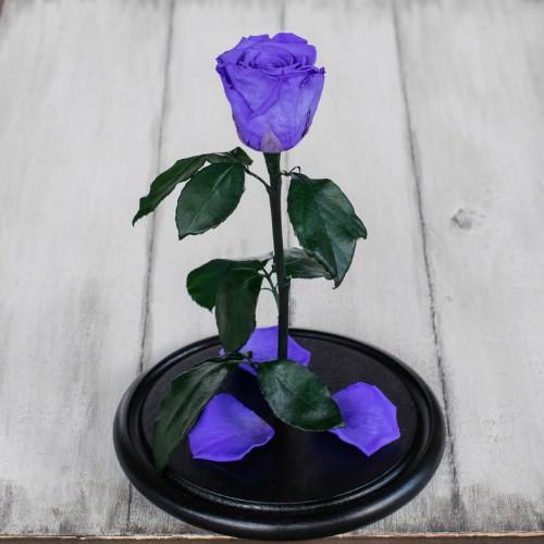 Роза в колбе Standart 33 см Лиловая-3