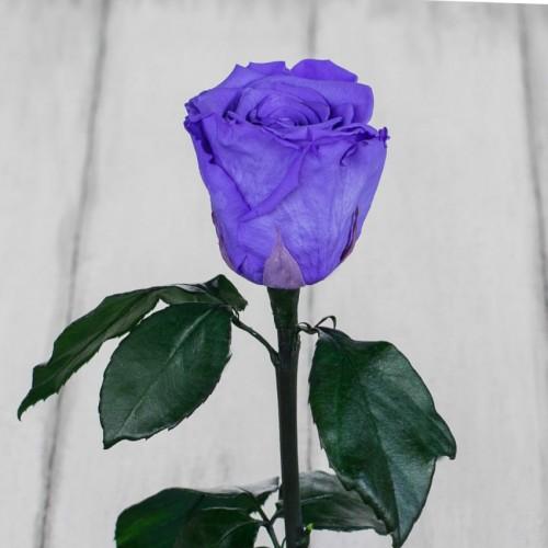 Роза в колбе Standart 33 см Лиловая-2