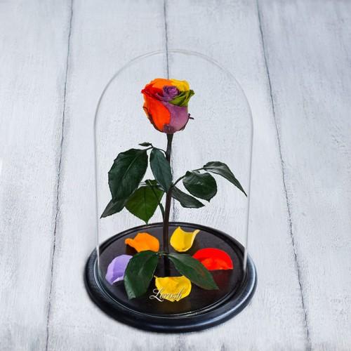 Роза в колбе Standart 33 см Радужная-1