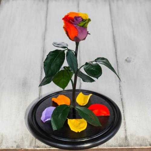 Роза в колбе Standart 33 см Радужная-4