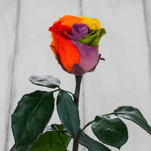 Роза в колбе Standart 33 см Радужная-3