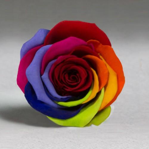 Роза в колбе Standart 33 см Радужная-2