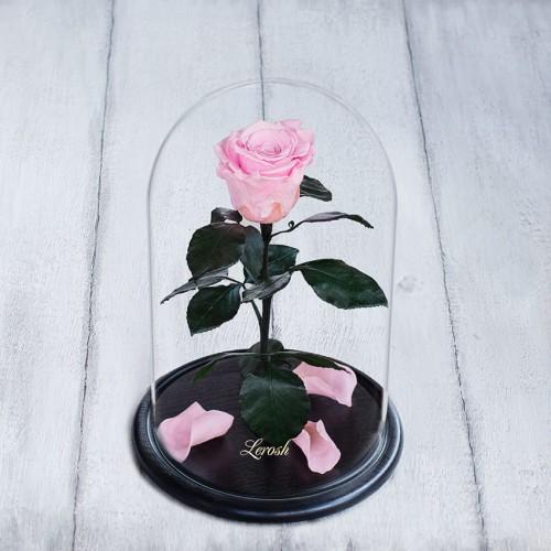 Роза в колбе Standart Розовая