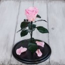 Роза в колбе Standart Розовая-3