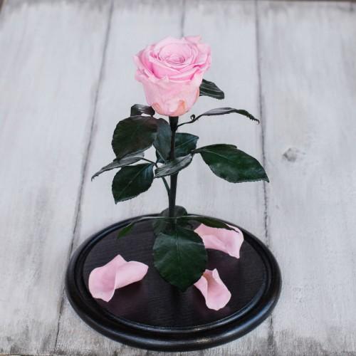Роза в колбе Standart 33 см Розовая-3