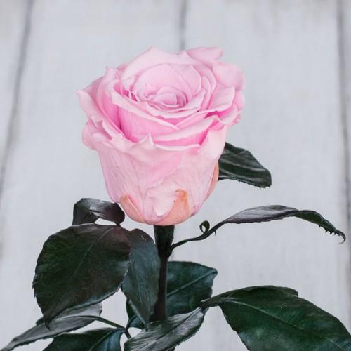 Роза в колбе Standart 33 см Розовая-2
